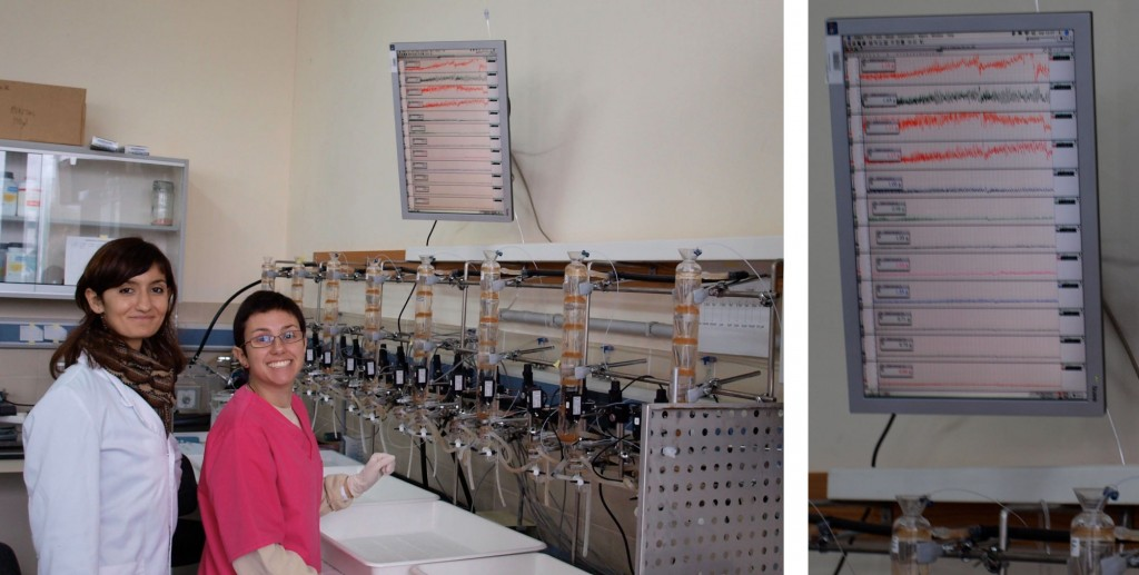 Beatriz Beltrán performing the first experiments in the Lab.